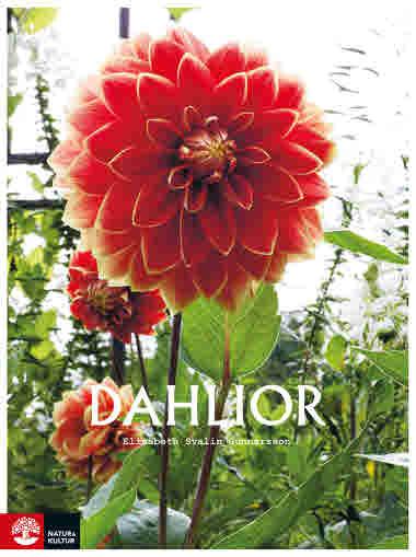 Dahlior av Elisabeth Svalin Gunnarsson jpg