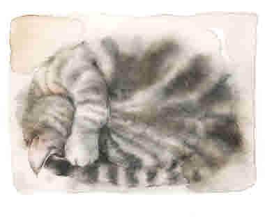 Kissen sover_illustration Ane Gustavsson.jpg