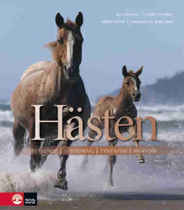Hästen av Bo Furugren jpg